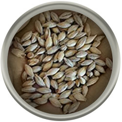 Product image for Maris Otter Malt (Floor Malted) – Tuckers Malting