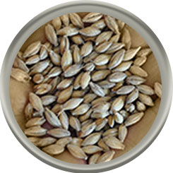 Product image for Lightly Peated Pale Malt