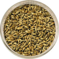 Product image for Red Ale (Melanoidin) Malt