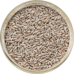 Product image for Rye Malt