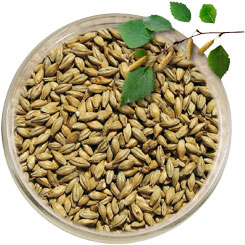 Product image for Beechwood Smoked Pale Malt