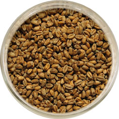Product image for Wheat Malt